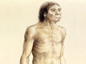 115413_homo-erectus--nenek-moyang-homo-sapiens_300_225